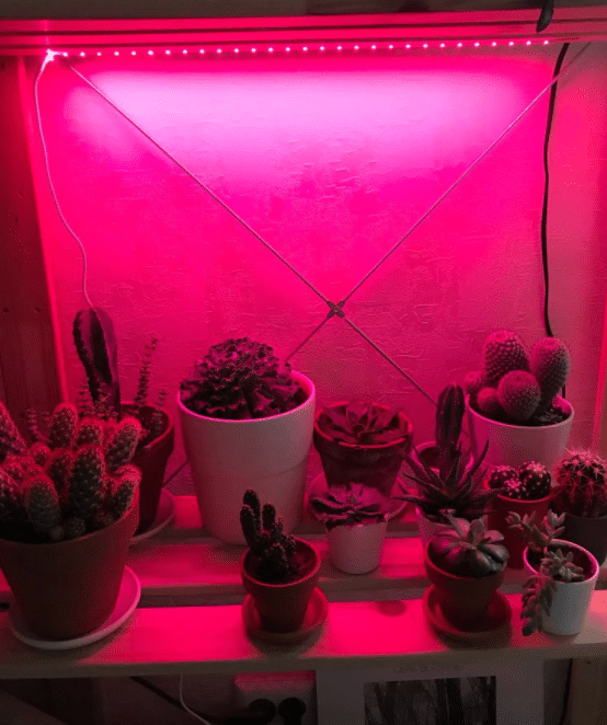 LED strip grow lights for plans